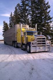 95 Best Its Got To Be A Pete Images On Pinterest | Big Trucks ... Winners Meats Winner Trucking Livestock Hauling Otis Colorado Philip Sims Llc Small Truck Big Service Ordrive Owner Operators Oct 20 Coalville Ut To Brigham City Johnson Home American Driver Jobs Faces Of Agriculture August 2012 Grain Best Truck 2018 I29 In Iowa With Rick Pt 13 Eld Trucking Mandate Could Cost Livestock Producers Bismarck