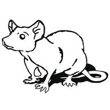 details zu ratte wandtattoo maus kleintier tiere ratten wohnzimmer wandaufkleber dekoration