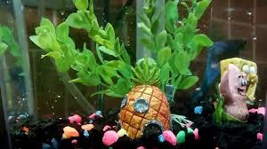 Spongebob Aquarium Decor Set by Betta Blue Aquarium Fish Spongebob And Patrick Tank Decor Youtube