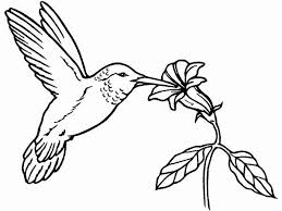 Hummingbird Coloring Pages 21461