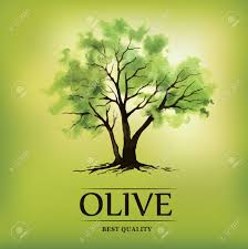 Vector olive tree For labels pack Stock Vector