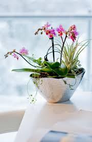 die richtigen pflanzen fürs badezimmer mein eigenheim