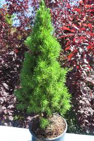 Good Plants For Bathrooms Nz by Top 6 Plants For Fairy Gardens And Miniature Landscapes