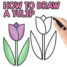 Easy Tulip Directed Drawing For Kids