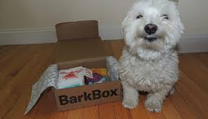 BarkBox Review - Is It The Best Subscription Box? | Puppy Smarts Bark Box Coupons Arc Village Thrift Store Barkbox Ebarkshop Groupon 2014 Related Keywords Suggestions The Newly Leaked Secrets To Coupon Uncovered Barkbox That Touch Of Pit Shop Big Dees Tack Coupon Codes Coupons Mma Warehouse Barkbox Promo Codes Podcast 1 Online Sales For November 2019 Supersized 90s Throwback Electronic Dog Toy Bundle Cyber Monday Deal First Box For 5 Msa