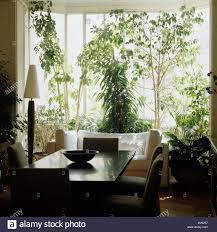esszimmer und pflanzen vor fenster stockfotografie alamy