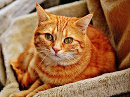 orange cat names orange cat names 90 colorful ideas find cat names