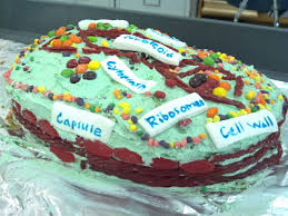 The Science and Technology Lady Edible Science Model Projects Part 5 Cell Cakes Project Year 2