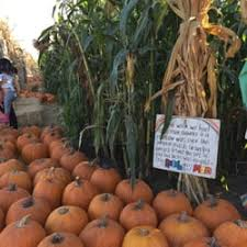 Pumpkin Patches In Colorado Springs 2014 by Phillips Farms Pumpkin Patch 17 Photos U0026 10 Reviews Pumpkin