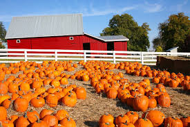 Best Pumpkin Patch Snohomish by Largest Pumpkin Patches In The U S Drive The Nation