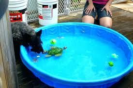 Small Kiddie Pool Plastic Hard Swimming Pools Round Dog Near