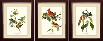 Bird Prints For Framing Antique Botanical Framed Print Set Of 12