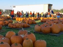 Pumpkin Picking Richmond by Holy Cross Church Sugar Land Texas Usa Pumpkin Patch