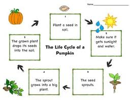 Life Cycle Of A Pumpkin Seed Worksheet by Life Cycle Of A Pumpkin Pearson Reading Street Unit 4 2 Common
