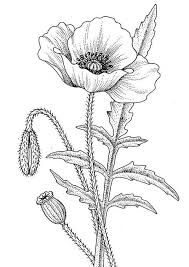 California Poppy Awesome Drawing Of Coloring Page