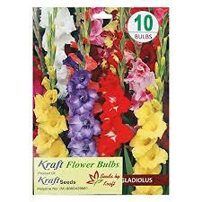 buy kraft seeds gladiolus flower bulb mix pack of 10 at