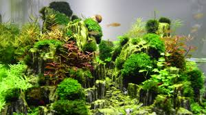 Aquascape: Planted Aquarium With Glimmer Wood Rock (DAY 14) - YouTube Aquascaping Fish Tank Projects Aquadesign George Farmers Live Aquascaping Event At Crowders Ipirations Mzanita Driftwood For Inspiring Futuristic Home Planted Riddim By Alejandro Menes Aquarium Design Contest Ada Horn Wood Beautiful Natural Hardscape For Superwens 2012 Aquascape Petrified Youtube Fish Aquariums The Worlds Best Planted Aquarium Products Designs Reviews Out Of Ideas How To Draw Inspiration From Others Aquascapes 7 Wood Images On Pinterest Sculpture Lab Tutorial Nano Cube Size 20 X 25h