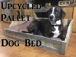 Pottery Barn Dog Bed by Diy Upcycled Pallet Dog Bed Youtube