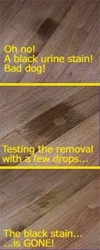 how to remove dog urine stains from hardwood floors urine stains