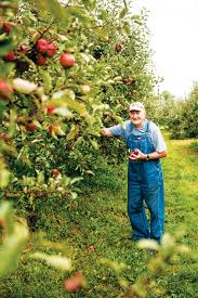 One On One: Jerry Mills, Owner, Mills Apple Farm | Dine | Feast ... Illinois Department Of Agriculture The Barn At Gibbet Hill Spartan Valley Olive Oil Welcome To Curtis Orchard Pumpkin Patch Blog Comments Patches Apple Orchards Lake Pointe Grill Springfield Menu Prices Restaurant Reviews Pricing Bomkes Baymont Inn Suites Updated 2017 Hotel