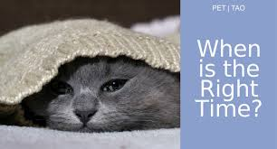 renal failure in cats kidney failure in cats knowing the right time to euthanize