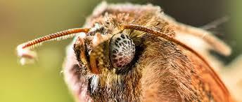 motten im schrank was dagegen tun insekten