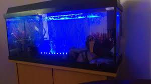 question axolotl tank tank mates filter led wall