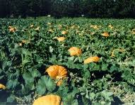Bishop Pumpkin Farm Hours by 241 Best Beale Afb Ca And Area Including Northern California