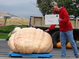Largest Pumpkin Ever Carved by Utah Giant Pumpkin Growers Ugpg Weigh Off Results 2017