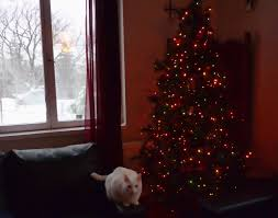 Simons Cat Christmas Tree by Cats Land Of My Sojourn