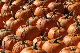 Pumpkin Patch Western Massachusetts by Trip To Pumpkin Patch Leaves Woman With Painful Infection From Tick Bi