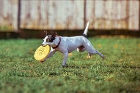Old Westbury Gardens Dog Halloween by Fun Fall Activities On Long Island