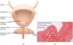 Pelvic Floor Tension Myalgia by Pelvic Floor Physical Therapy And How It Relates To The Outpatient