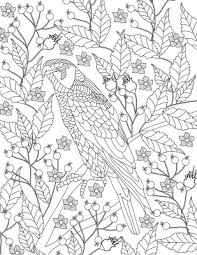 Bird Coloring Pages For Adults 19 Free