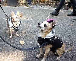 Tompkins Square Halloween Dog Parade by I Survived The Halloween Dog Parade Albert U0027s New York