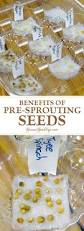 Sprouted Pumpkin Seeds Phytic Acid by Best 25 Sprouting Seeds Ideas On Pinterest Sprouts Broccoli