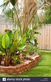 Flower Bed In Residential Backyard With Palm And Banana Trees With ... Front Yard Landscaping With Palm Trees Faba Amys Office Photo Page Hgtv Design Ideas Backyard Designs Wood Above Concrete Wall And Outdoor Garden Exciting Tropical Pools Small Green Grasses Maintenance Backyards Cozy Plant Of The Week Florida Cstruction Landscape Palm Trees In Landscape Bing Images Horticulturejardinage Tree Types And Pictures From Of Houston Planting Sylvester Date Our Red Ostelinda Southern California History Species Guide Install