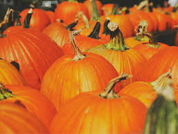 Lumpkin The Pumpkin by Looking For The Best Pumpkin Patches In Georgia