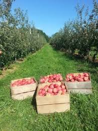 Apple And Pumpkin Picking Maryland by Lewis Orchard In Dickerson Md Montgomery Co Has Pick Your Own