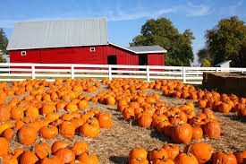 Pumpkin Patch Orlando Fl by Largest Pumpkin Patches In The U S Drive The Nation