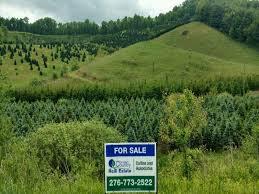 Acreage Christmas Tree Farm Mouth Of Wilson Grayson County Virginia