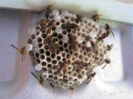wasp killer get rid of wasp nests without chemicals