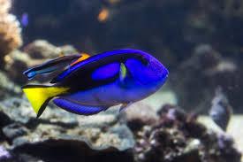 aquarium geant a visiter belgique nausicaá l aquarium géant à boulogne sur mer orphea