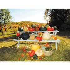 Minecraft Pumpkin Seeds Wont Plant by 38 Best Pumpkin Patch Fundraiser Images On Pinterest Pumpkin