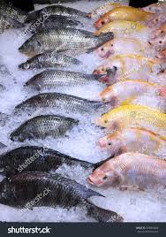 Frozen Yellow And Black Nile Tilapia Fish In A Pile Of Ice
