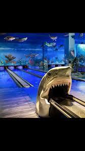Hammerhead Shark Pumpkin Stencil by 253 Best Shark Images On Pinterest Sharks The Shark And Shark Week