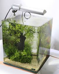 Aquarium Planted Tank Aquascape Aquascaping