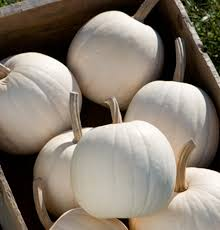 Varieties Of Pie Pumpkins by Seeds Of Success New Cantaloupe Pumpkin And Acorn Squash Seeds