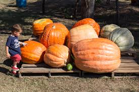 Pumpkin Patch Restaurant Houston Tx by Local U2013 Laureen Loves