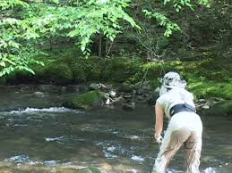 fly fishing little river of the great smoky mountains national park